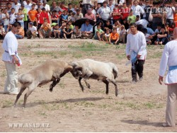 Национальные игры и забавы Узбекистана