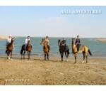 On Akhalteke horses in Karakum Desert